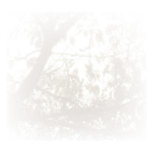建築「と」展 vol.1 いえと庭